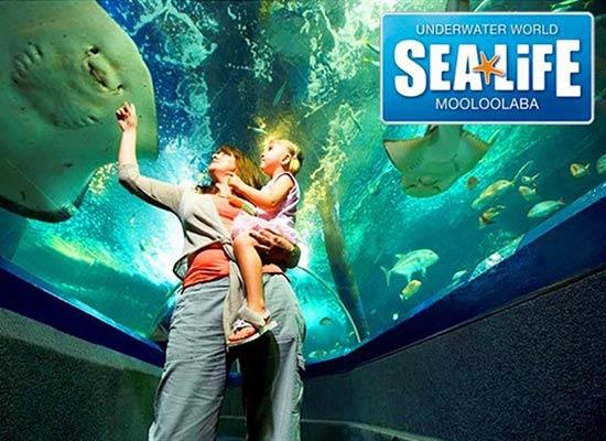 attraction-sea-life