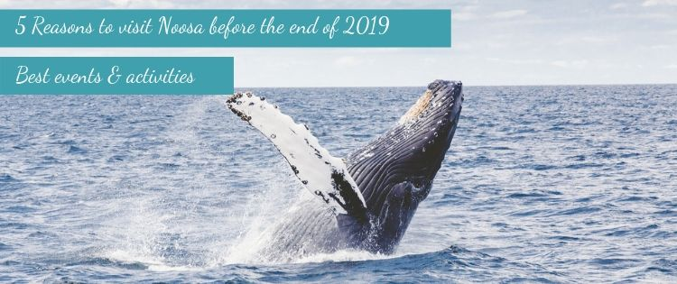whale watching is one reason to visit noosa before end of 2019