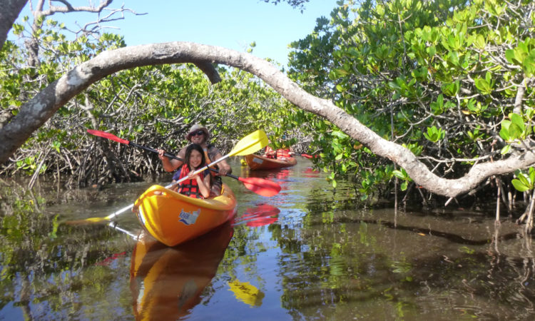 kayak noosa mangroves